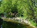 River Avon, Brownsover - geograph.org.uk - 419936.jpg