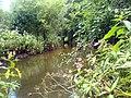 River Maun, near Snake Hill - geograph.org.uk - 494518.jpg