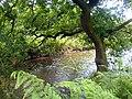 River Maun - geograph.org.uk - 494534.jpg