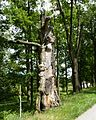 Rožmberk, památné stromořadí okolo hráze (3).JPG