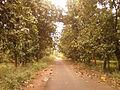 Road to Vellanki from Bheemunipatnam, Visakhapatnam district.jpg