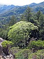 Robert Louis Stevenson State Park.jpg