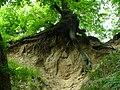 Roots2.jpg