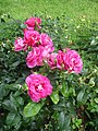 Roses square Albert-Besnard.jpg