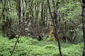Rotes Moor Rhoen 3.JPG
