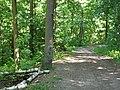Route du Poteau de Paradis (forêt domaniale de Montmorency) - panoramio.jpg