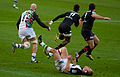 ST vs Harlequins - Match-9.jpg