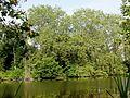 Saint-Jean-aux-Bois (60), étang de Sainte-Perrine 5.jpg
