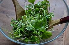 Salade de pourpier.JPG