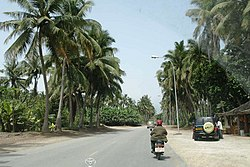 Coconut trees in the coastal area of Salalah
