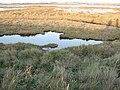Salt marsh - geograph.org.uk - 1601919.jpg