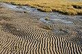 Sand and Mud - geograph.org.uk - 652466.jpg