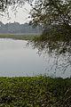 Santragachi Lake - Howrah 2013-01-25 3588.JPG