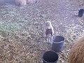 Scali Farm Alon More 131.jpg