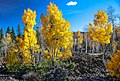 Scenic fall colours along Utah Hwy 14 - emrging from a 1000 year old lava flow - (22190604463).jpg