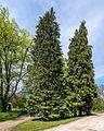 Schmieden Baumgruppe Am Spaalhaus Wüstung Spaal XIV.jpg