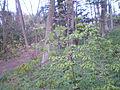 Schots en scheef schiet alles op en soms blijft er wat dat groter wordt-alle bomen verdienen het certificaat-geen nieuwe aanplant.....JPG