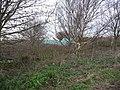 Scrubby woodland hiding blue bales, Birkin Lane - geograph.org.uk - 1621618.jpg