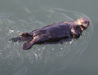 Synapsid - The sea otter has the densest fur of modern mammals.