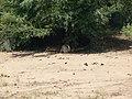 Shady cats (393891050).jpg