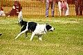 Sheep Dog Display (2621831134).jpg