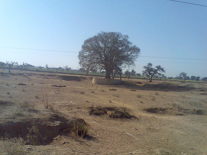 File:Shivnathpura in Summer - panoramio.jpg