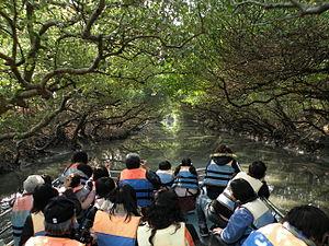 Bhitarkanika Mangroves - Image: Sihcao Green Tunnel