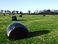 Silage Bales - geograph.org.uk - 319310.jpg
