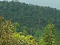 Sinharaja Rainforest - panoramio - Frans-Banja Mulder.jpg