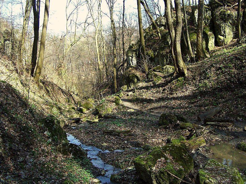 Un des nombreux ravins du bois Wolski à Cracovie. Photo d'Opioła Jerzy