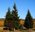 Slovakia autumn 26.JPG