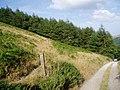 Small woodland near Plymog on Fron Hen - geograph.org.uk - 1587678.jpg