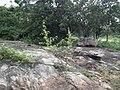Snap from Bannerghatta National Park Bangalore 8521.JPG