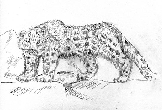 Snow leopard by Lixihan 1.jpg