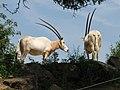 Some pretty amazing horns (540086746).jpg