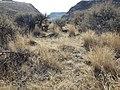 South of Marsing sagebrush steppe (I.O.N. cutoff) (9674221931).jpg
