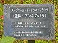 Souvenir d Anne Frank(由来の説明).jpg