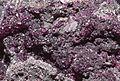 Sphaerocobaltite - spherocobaltite 1100.FS2015.jpg