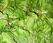 Spinach produce-1.jpg