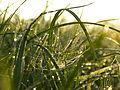 Spinnennetz im Gras.JPG