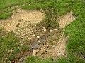 Spring, Birkenshaw - geograph.org.uk - 517723.jpg
