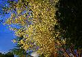 Spring Trees (3376185833).jpg