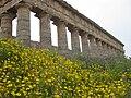 Spring at the temple at Segesta.jpg
