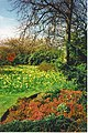 Spring in Duthie Park - geograph.org.uk - 251051.jpg