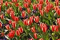 Spring in London (6967715224).jpg