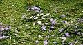 Spring in London (7119638263).jpg