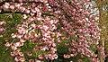 Spring in London (7154093061).jpg