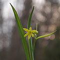 Springs star (5640851519).jpg