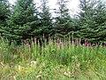 Springwell Forest near Upper Kiltinny - geograph.org.uk - 2022101.jpg