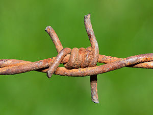 Barbed wire (rusting after years of hard work)...